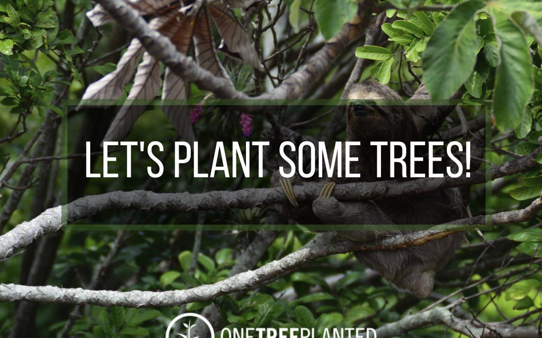 Let's plant some trees!